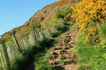 Arthurs Seat Hike (12)
